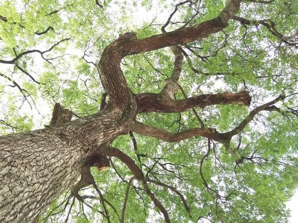 キラキラ公園木