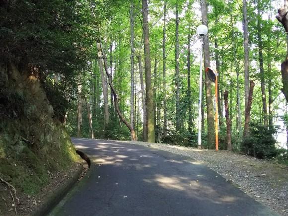 滝の宮展望台までの道