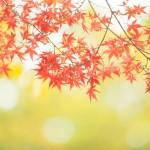 紅葉フリー